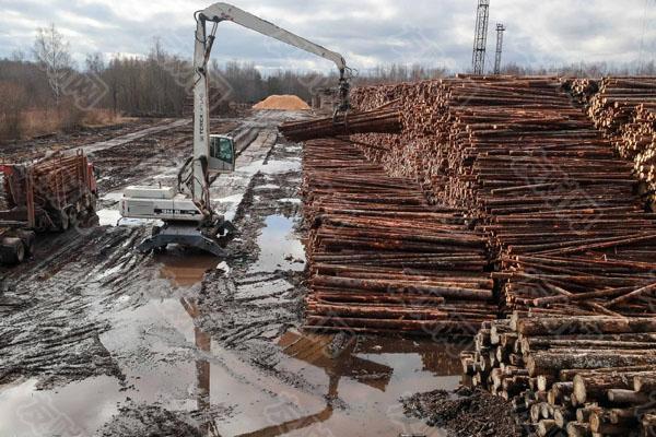 木材价格飙升了232% 可能会在未来几个月失控